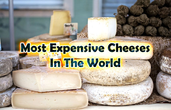 most-expensive-cheeses-in-the-world